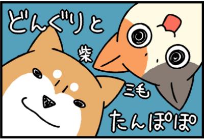 どんぽぽシリーズ