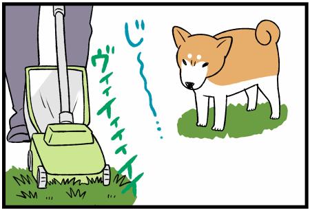 20200920芝刈りsa