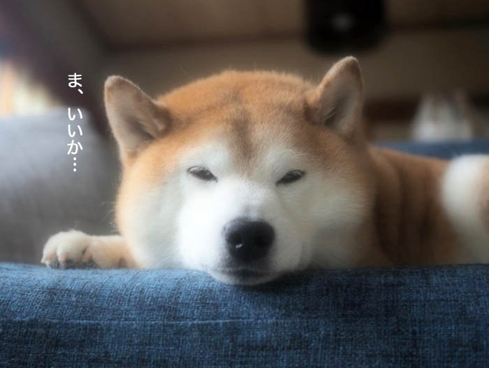 9日夕ブログ4