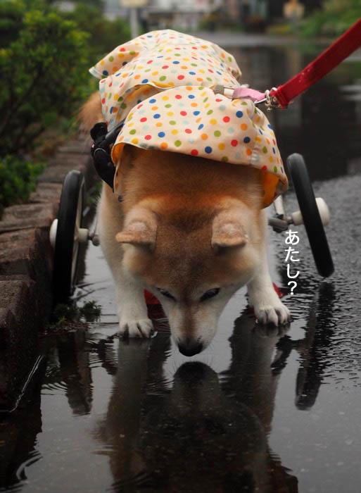 15日夕ブログ8