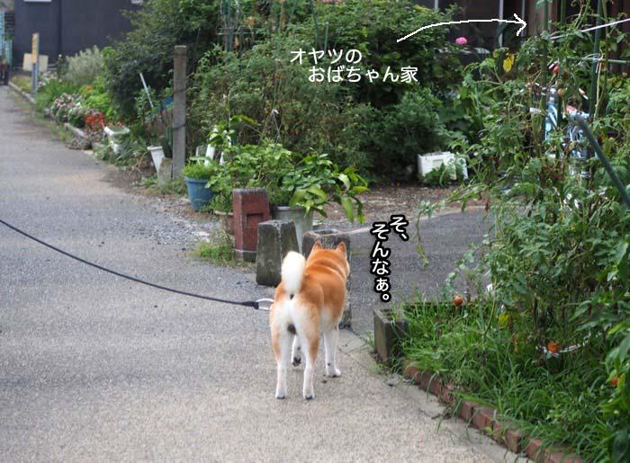 19日夕ブログ3