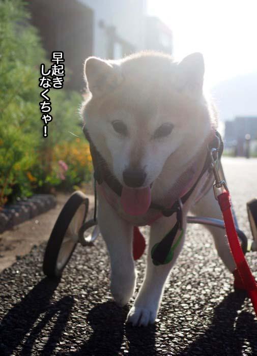 23日夕ブログ4