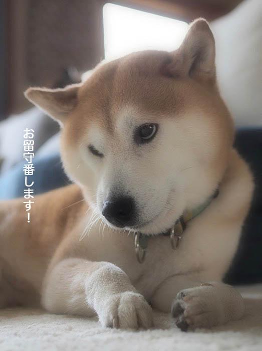 20日夕ブログ5