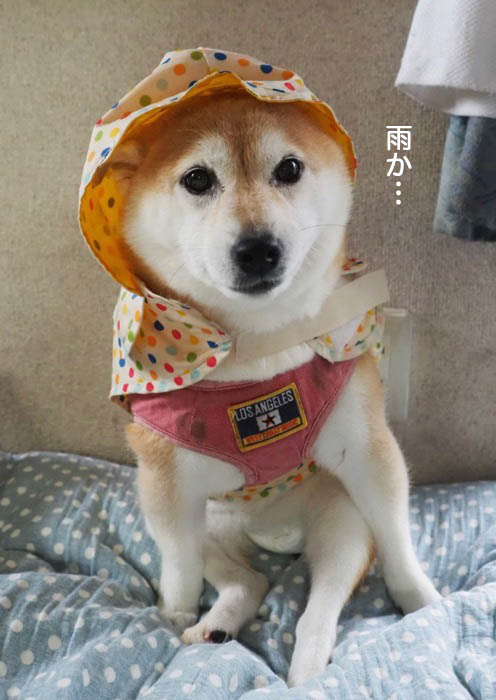 29日夕ブログ5