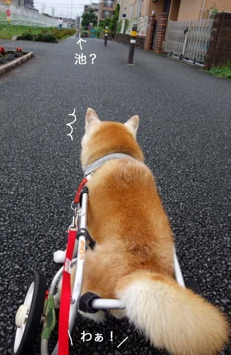4日夕ブログ2