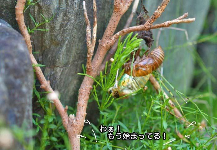 23日夕ブログ3