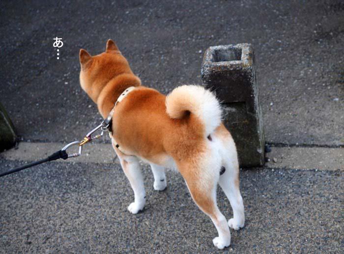 19日夕ブログ2