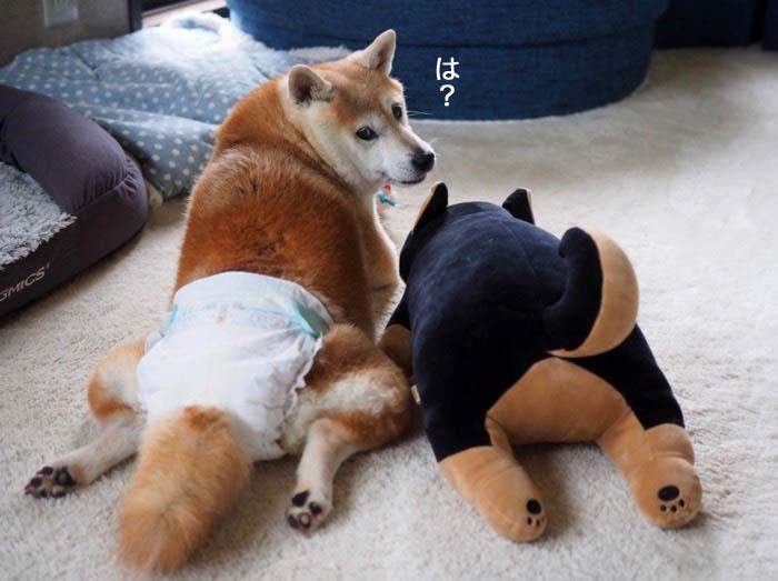22日夕ブログ8