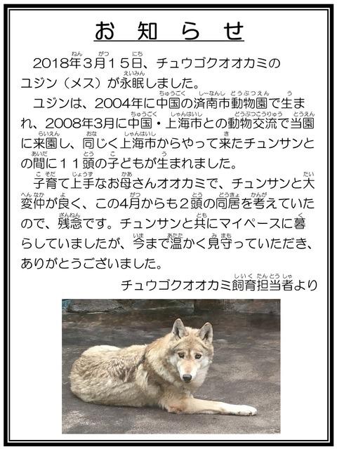 ☆訃報 チュウゴクオオカミ ユジン 担当者より