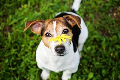 春の訪れを感じるような犬+花の画像13