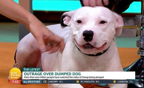 自分を捨てる飼い主に必死に追いすがる子犬2