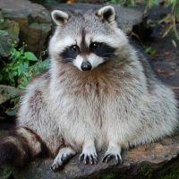 可愛い動物で打線
