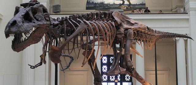 ティラノサウルス_1
