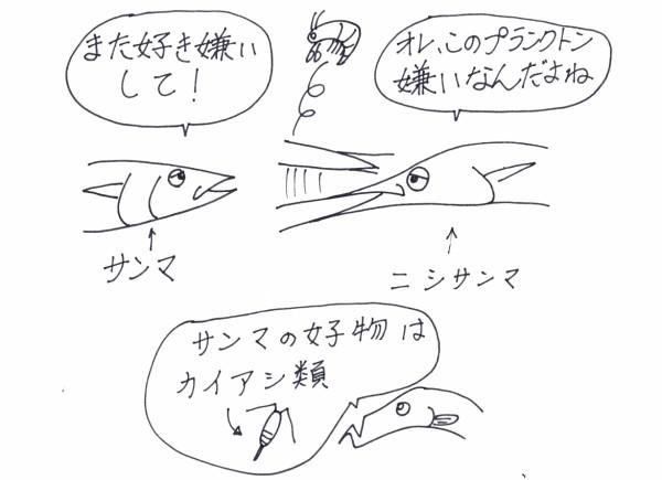 びっくり魚>大西洋のサンマは口が・・・ : 4色ボールペンde魚の絵 by ...
