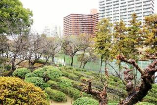 Tea Garden along Kyobashi River