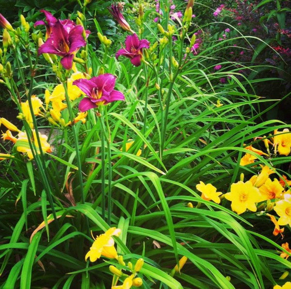 Check out my 13 Best Gardening Tips to create a gorgeous budget friendly oasis.