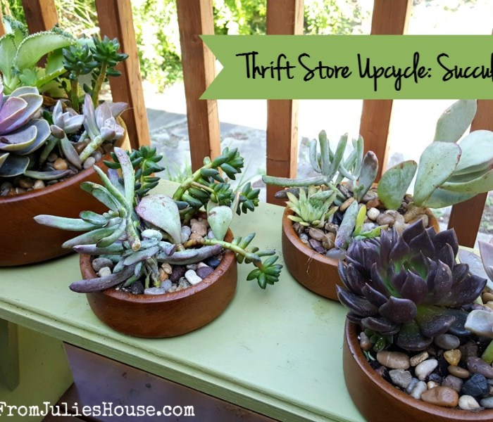 Thrift Store Upcycle: Succulent Planters