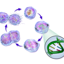 Life Cycle of a Cancer Cell