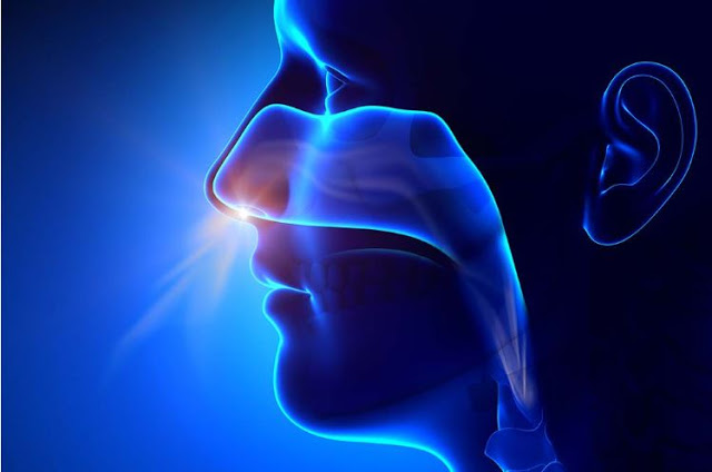 What is called sinusitis and allergy ?