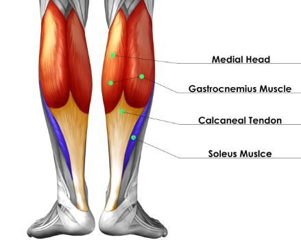 Calf muscle shortened , long time sitting , muscle shortenting, muscle soreness, myalgia, joint stiffness, pain in legs, knees pain.