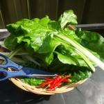 Fresh veggies from the garden LiveKen diet