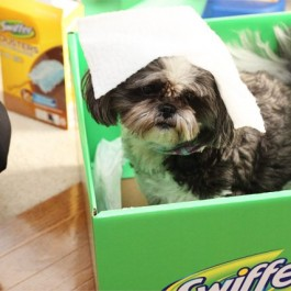 """Swiffer. A pet owners """"other"""" best friend! I love that I can keep my floors looking like new with the help of Swiffer. #swiffer effect"""