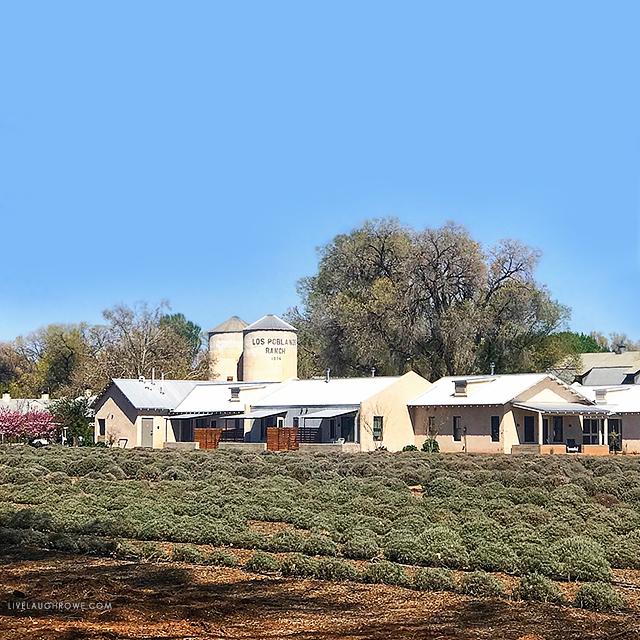 Beautiful Los Poblanos Lavender Farm
