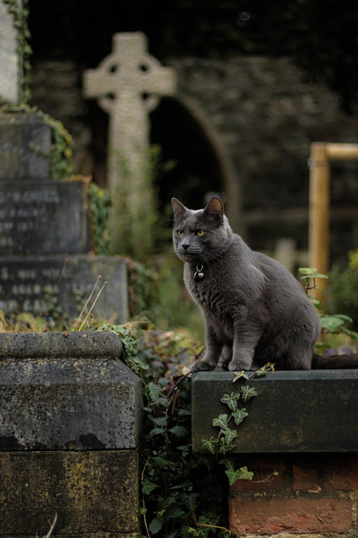 Cemetery. Spooky Season Bucket List