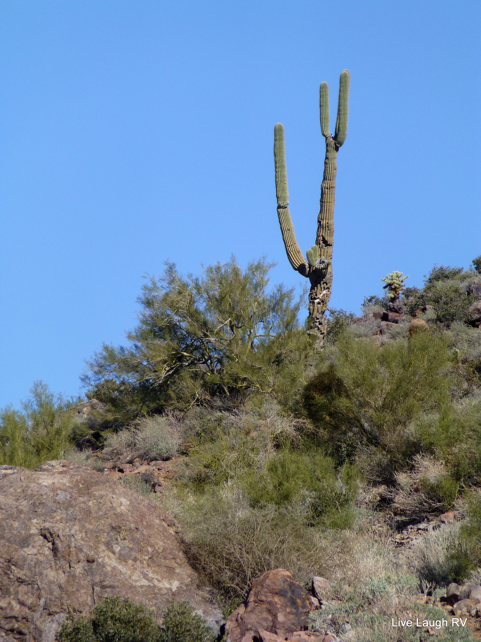 Saguaro Cactus Live Laugh Rv