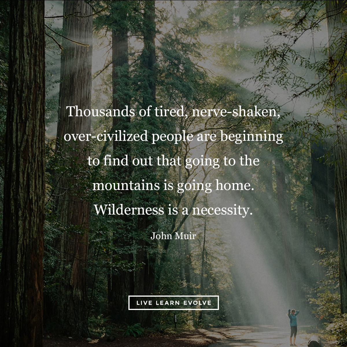 John_muir_wilderness_forest_bathing