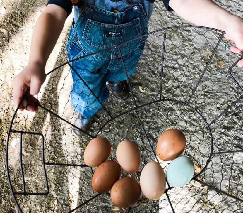 child collecting eggs