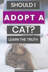 Should I Adopt a Cat? #newcat #adoptacat #catadoption #adoptdontshop