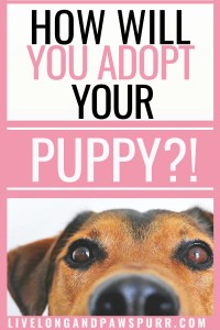 adoption options for a dog