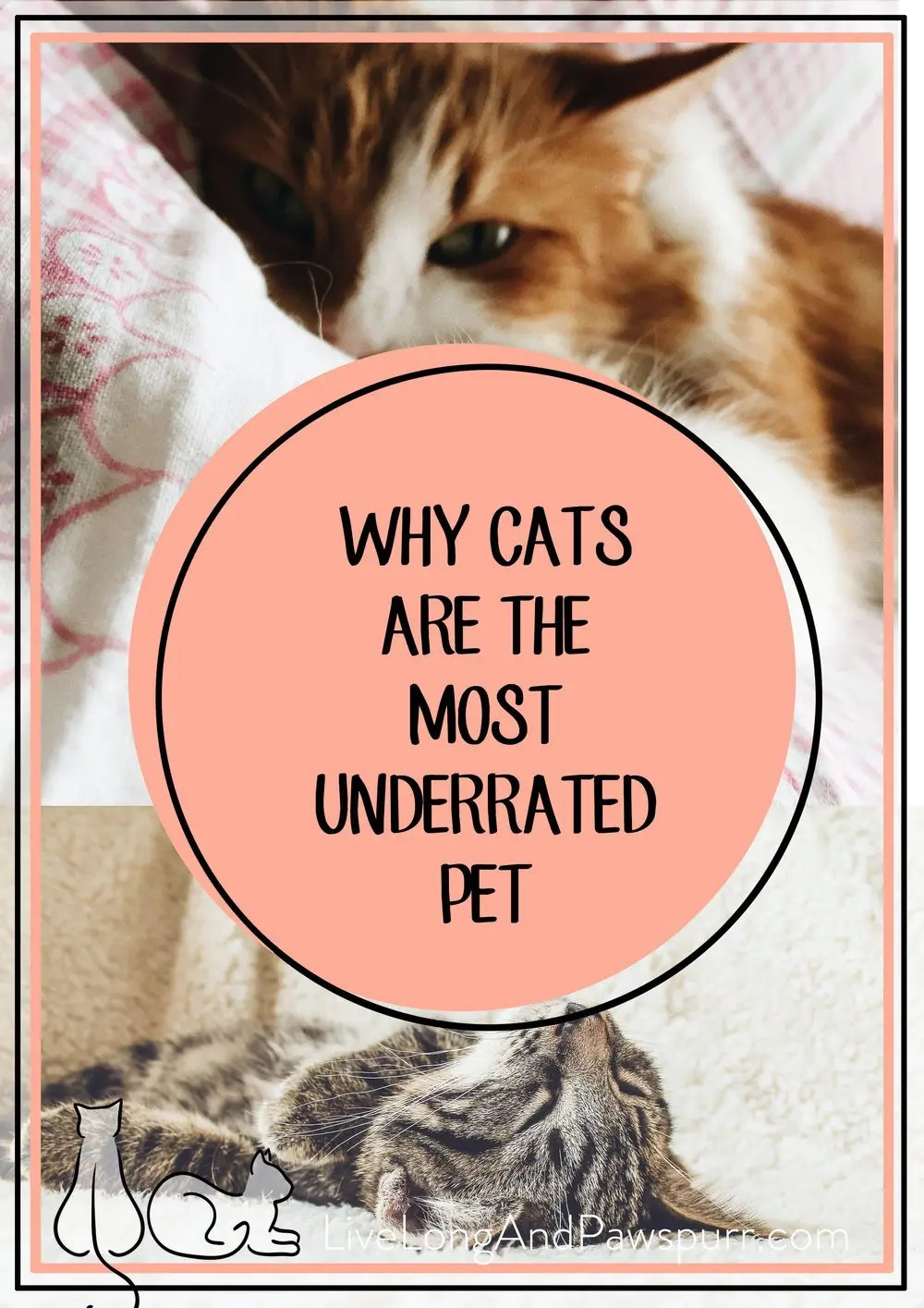 Why Cats are the Most Underrated Pet