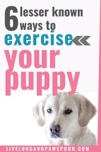 how to exercise your dog #dogexercise #dogtraining