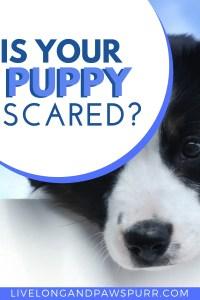 Is Your Puppy Scared? #understandingdogs #understandpuppies #isyourdogscared #dogscared #dogbehavior