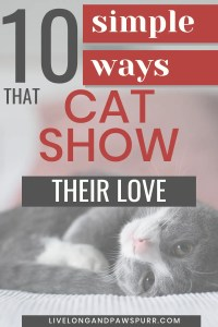 10 simple ways cats show their love
