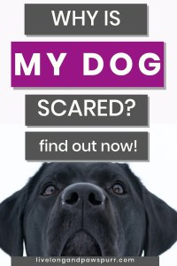 how to tell if your dog is scared