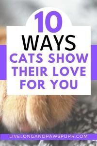 10 Ways Cats Show Their Love For You #catlanguage #catlove #understandingcats #catbehavior