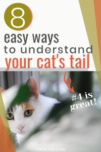 Understanding Your Cats Tail #catbehavior #catfacts #understandingcats #cattalk
