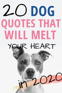 20 dog quotes that will melt your heart #dogquotes #quotes #dogquote