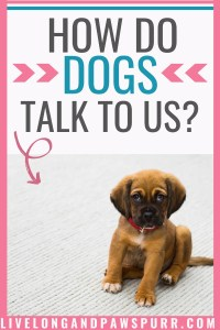 How Do Dogs Talk To Us? #understandingdogs #dogcommunication #dogbehavior #dogtalk