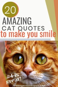 20 Cat Quotes To Make You Smile #catquotes