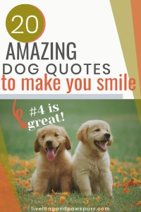 Dog Quotes To Make You Smile #dogquotes #puppyquotes #petquotes #cutequotes #quotes #dogsayings #puppysayings