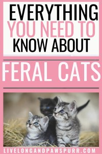 Everything You Need to Know About Feral Cats #feralcats