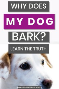 why do dogs bark #dogbark #dogfacts #dogquestions