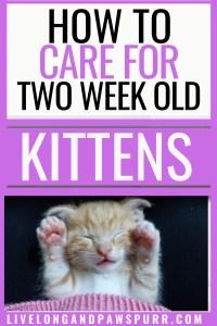 All About 2 week old kittens #2weekoldkittens #twoweekoldkittens