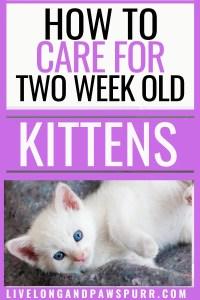 All About two week old kittens #twoweekoldkitten #kittencare #allaboutcats