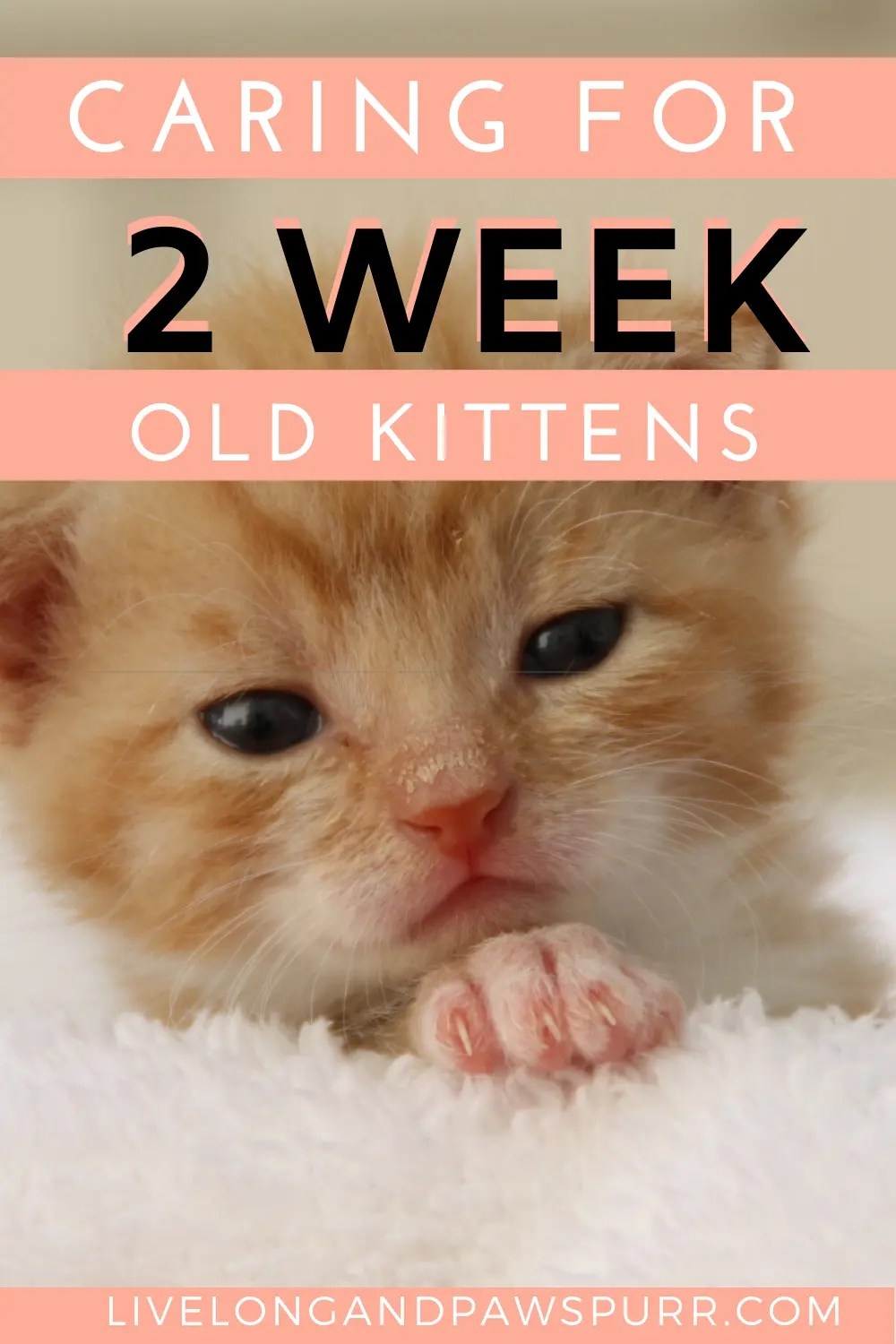 Everything You Need To Know About 2 Week Old Kittens Live Long