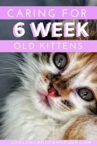 All About 6 week old kittens #sixweekoldkittens #kittencare